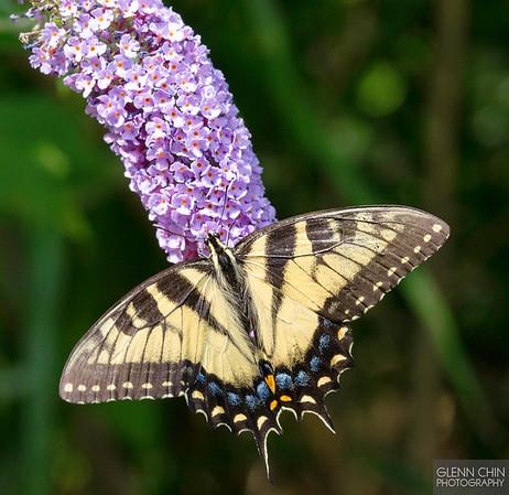 20130817_Butterflies_184-Edit