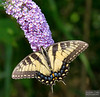 20130817_Butterflies_184-Edit