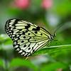 Butterfly - Magic Wings
