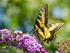 20130817_Butterflies_145-Edit