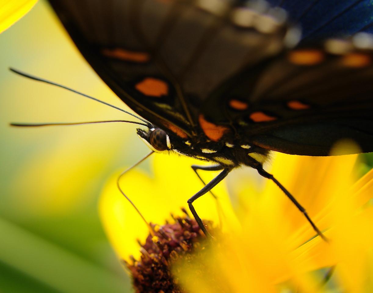 Butterfly (8)