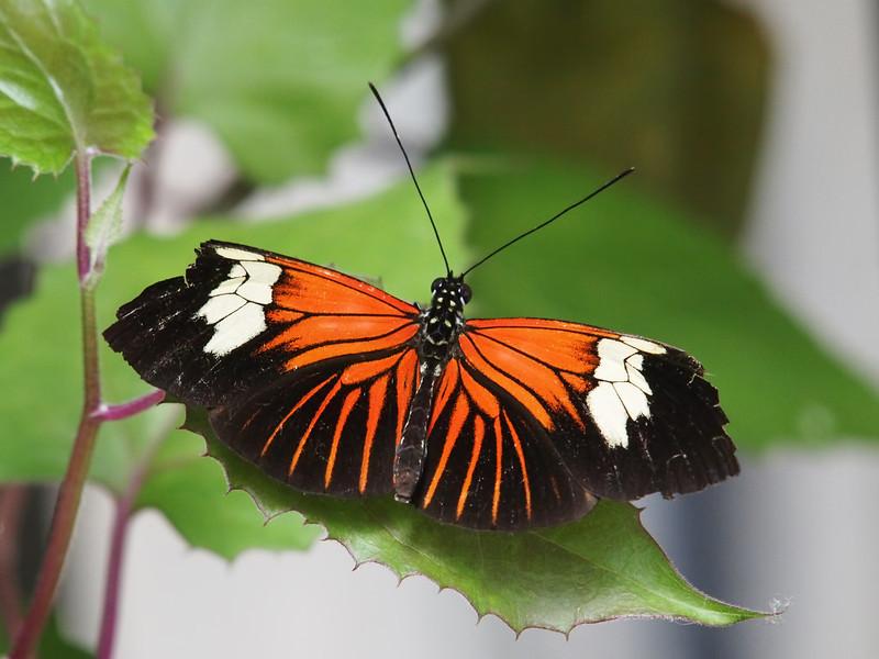 Boston Butterfly Garden - 30 Mar 2011