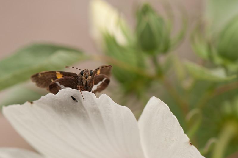 Butterfly (10)