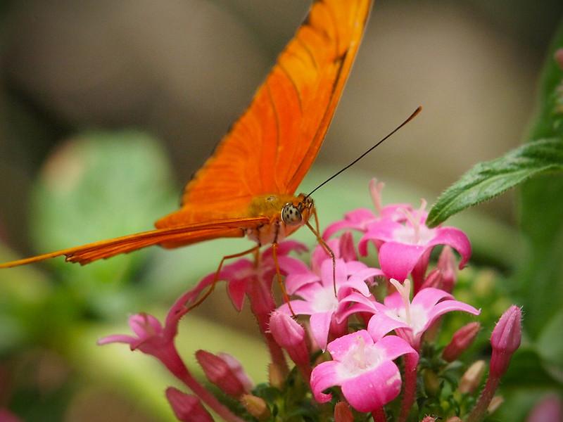 Julia at Butterfly Jungle - 16 Apr 2011