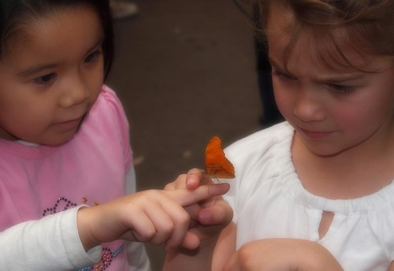 Julia Longwing (female) under scrutiny at Butterfly Jungle - 11 Apr 2010