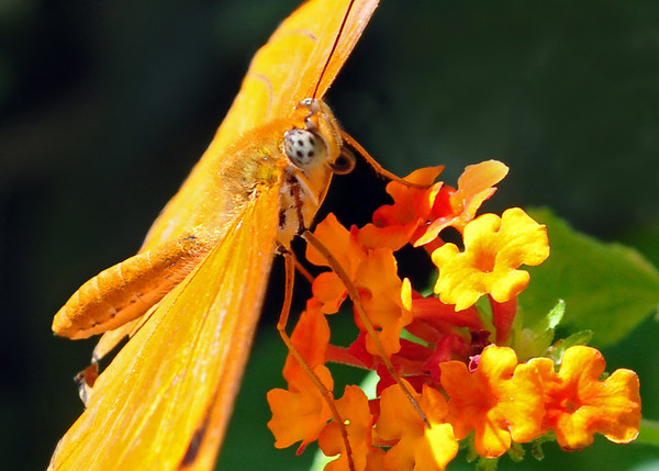 Butterflies & Other Insects