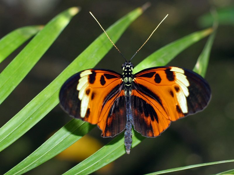 St. Marteen Butterfly farm
