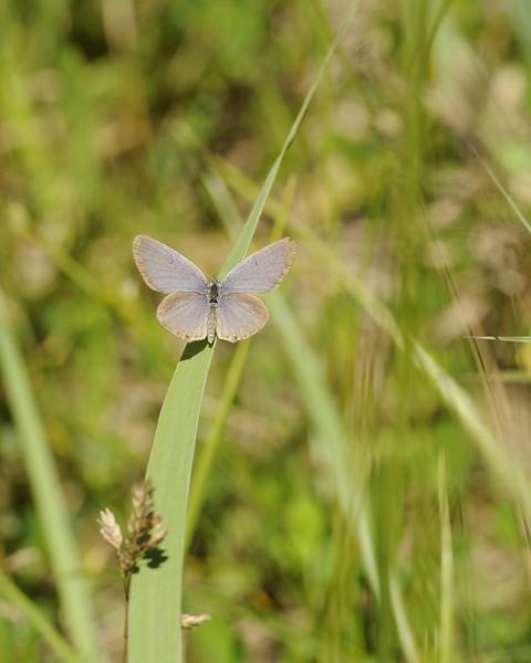 Butterfly (3)
