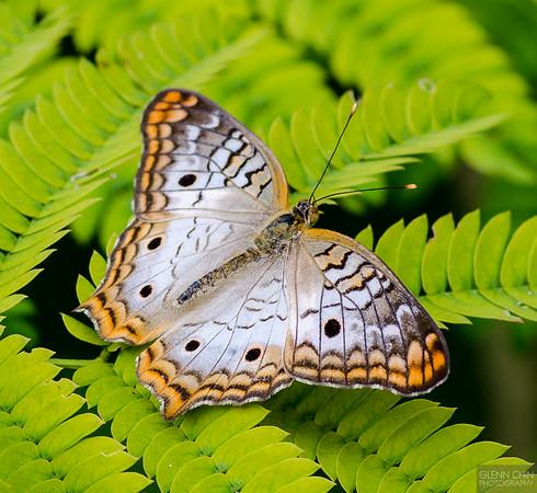 20140830_Sweetbriar Nature Center_177