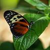 Texas Discovery Gardens - 24 Nov 2012