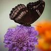 Butterfly Jungle - 29 Mar 2012