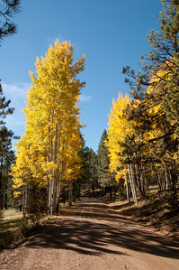 Blue sky, Aspen trees with changing fall leaves and sunshine make this day perfect.