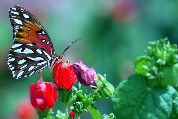 Nature:  Birds, Butterflies, Animals, Reptiles, Flowers