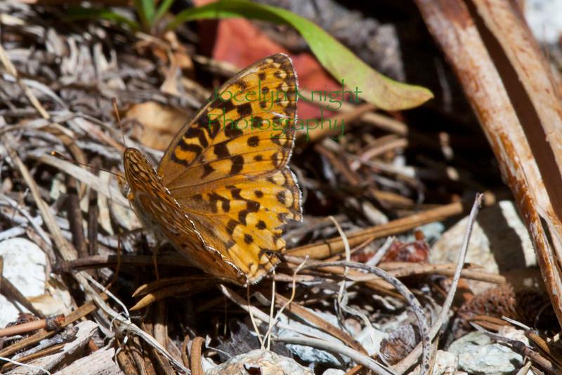 Butterfly_5028