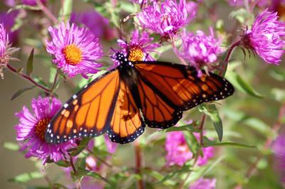 Butterflies_2006-10-08_48