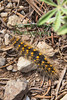Caterpillar0256