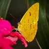 Butterfly Jungle - 14 Apr 2012