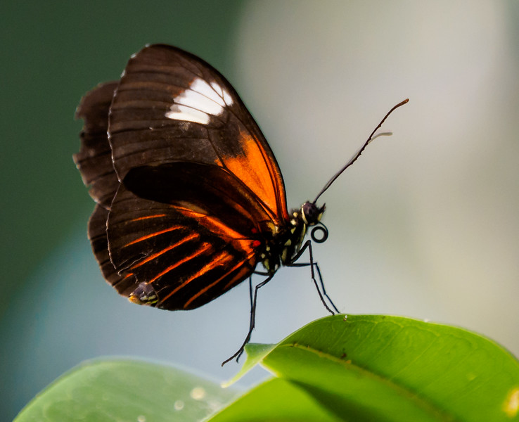 Butterfly Jungle - 5 Apr 2015