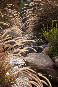 Grasses, Water and Rocks