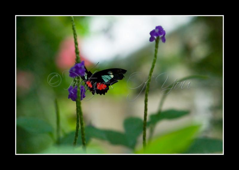 Flutter By Pretty Butterfly