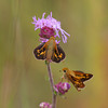 Leonards Skipper - August 22, 2010