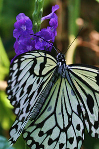 Butterfly House, Missouri Botanical Gardens; St. Louis, Missouri