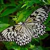 Paper Kite - Butterfly Wonderland - 20 Nov 2020