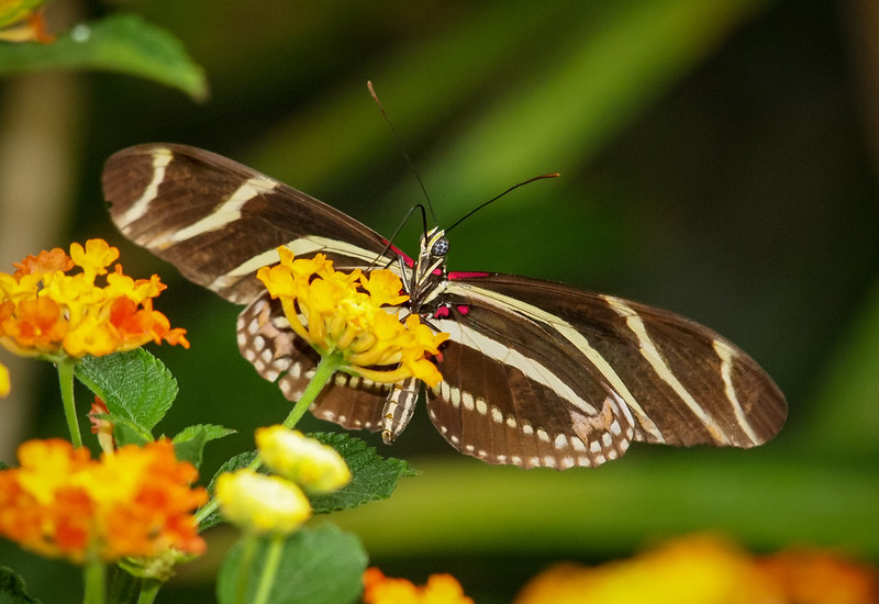 Butterfly Jungle - 14 Apr 2012