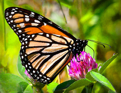 Monarch  08 23 09  062 - Edit