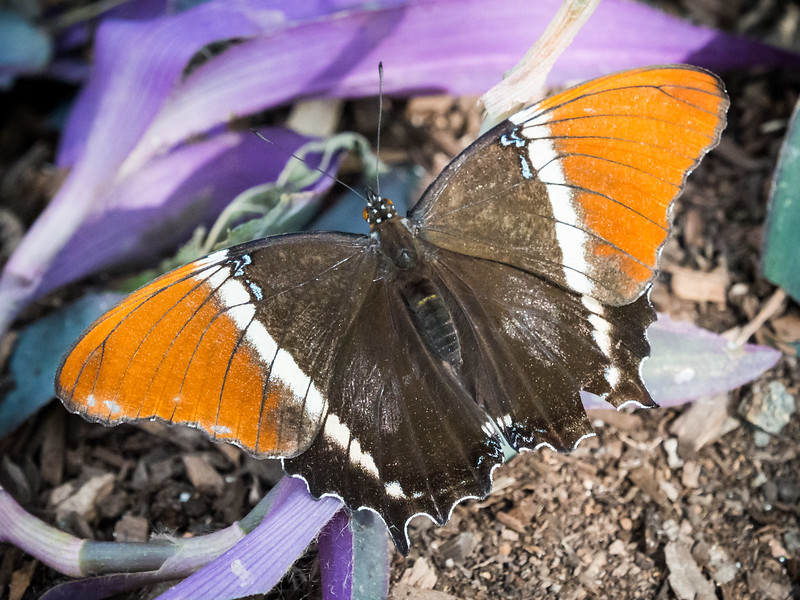Butterfly Wonderland - 29 Jan 2017