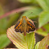 Leonards Skipper - August 2010