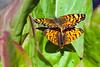 2Butterflies9301a
