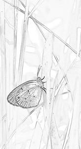 Little Yellow Eurema lisa  08 25 10  001 - Edit - Edit