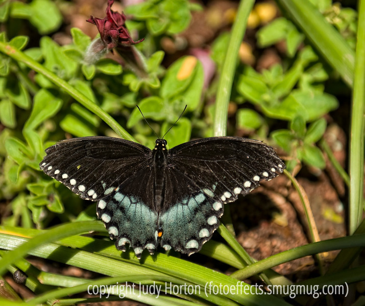 Butterfly; best viewed in the larger sizes