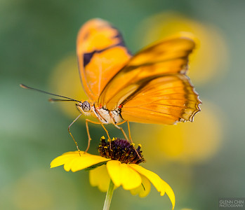 20140830_Sweetbriar Nature Center_151