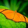 Julia - Butterfly Wonderland - 20 Nov 2020