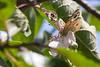 Butterfly9270