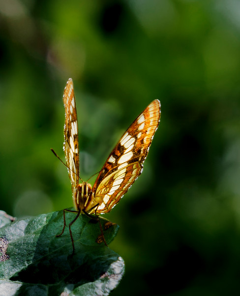 Perched Butterfly