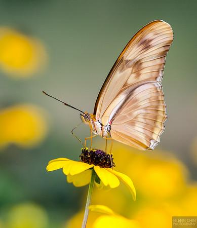 20140830_Sweetbriar Nature Center_147-2