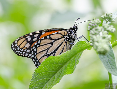 20140830_Sweetbriar Nature Center_215