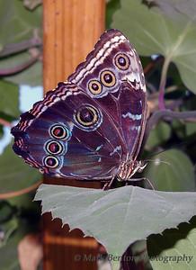Pretty Purple Pattern