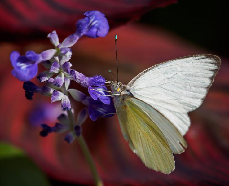 Butterfly Wonderland - 28 Mar 2014