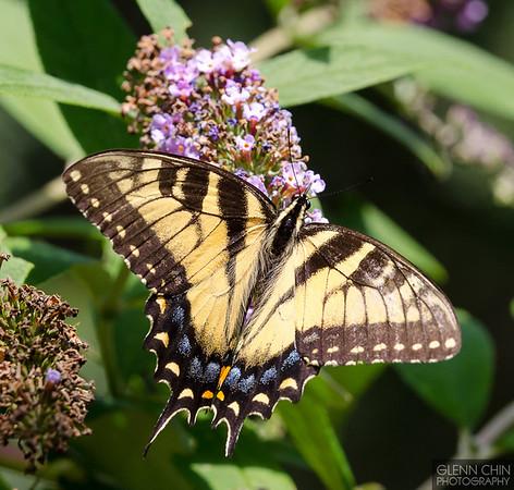 20130817_Butterflies_163