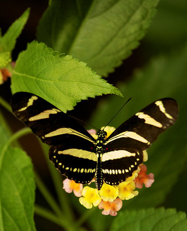 Butterflies and a Tortoise