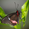 Butterfly Wonderland - 28 Mar 2014