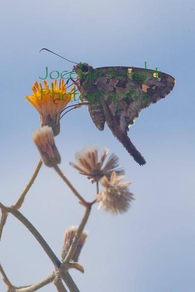 Butterfly3641