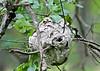 Hornets Nest 1-1