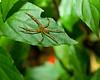 Spider Costa Rica