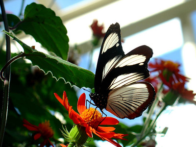 Butterfly, Peggy Norbert Nature Museum, Chicago
