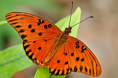 Butterfly Estates